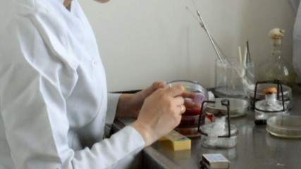 microbiologist examines the results of experimentation