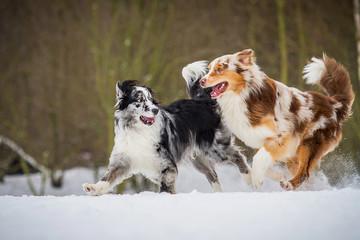 Hunde im Spiel