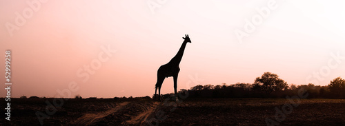 Giraffe Silhouette at Sunset