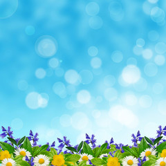 Field of different flowers and leaves on the sky background