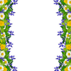 Frame: different colorful flowers