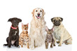 Постер, плакат: Large group of cats and dogs in front isolated