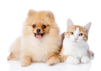 orange cat and spitz dog together. looking at camera. isolated