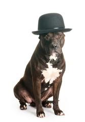 Devoted dog