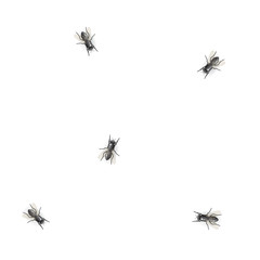 Flies on white background - illustration