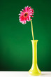 red gerbera in yellow vase on green screen