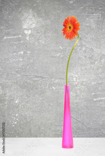 orange gerbera in violet vase