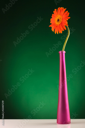 orange gerbera standing in a vase