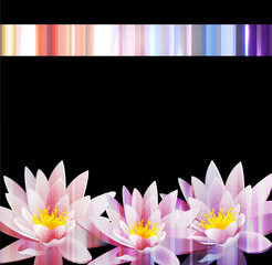 vector holiday background with a water lily