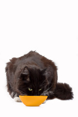 Black cat drinking froma yellow bowl.
