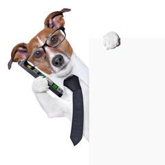 dog  smartphone
