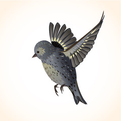 Isolated cute bird for your design