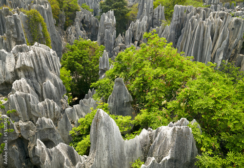 Stone forest  park. China