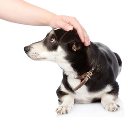 female hand patting dog head. isolated on white background
