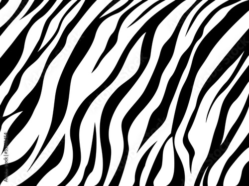 zebra-skory