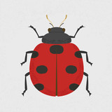 Lady Bug , eps10 vector format