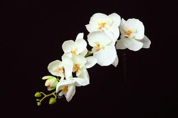 Artificial orchid on a black background