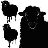 animal sheep lamb vector isolated on white background