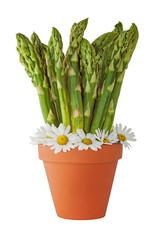 Asparagus Bundle in a Plant Pot