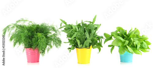 Fresh herb in colorful pails isolated on white