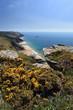 South Devon Coastline England