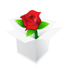 red rose present inside a box illustration design