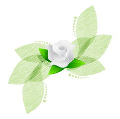 rose over green leaves illustration design