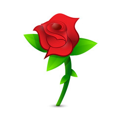 red rose illustration design
