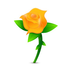 orange rose illustration design
