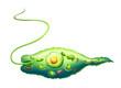 Euglena - 53031605