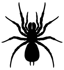 Silhouette of a spider