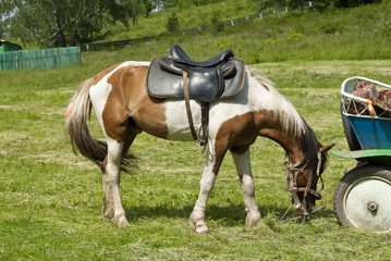 пегий конь
