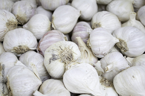 White Garlic