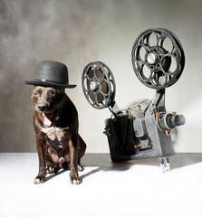 Dog and cinema