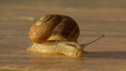 walking snail