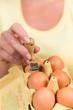 bio stempel auf eiern
