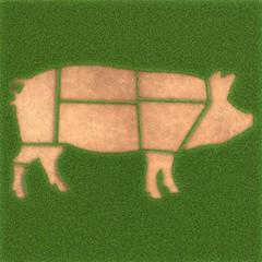 Fleischkunde am Schwein