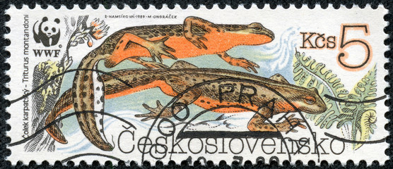 stamp printed in CZECHOSLOVAKIA shows a Triturus montandoni