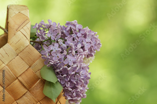 lilac flowers in birchbark basket