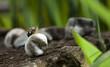 Snail on white rock