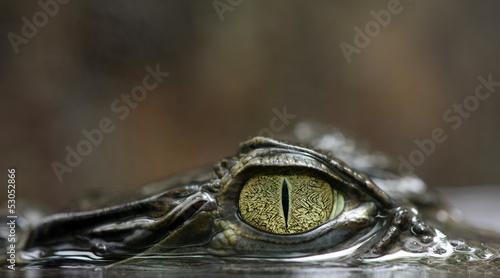 Aluminium Krokodil Caimano dagli occhiali -