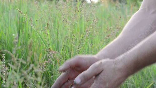 Man hands with wheat