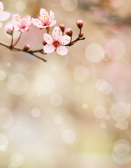 Plum flower macro shot with bokeh background