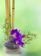 Wystrój ikebana, Orchidee, bambusa, Galet
