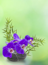 Skład ikebana, orchidea, bambou, galet