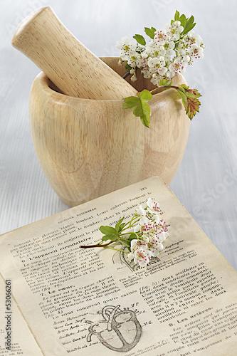 Phytothérapie - Aubépine en fleurs