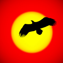 Silhouette of an eagle