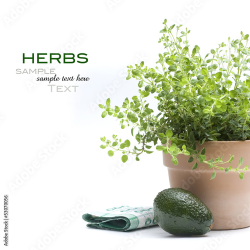 Fresh green herb in pot with avocado on white background