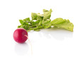 Bunch of fresh radish isolated on white