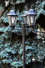 Lantern on the background of blue spruce